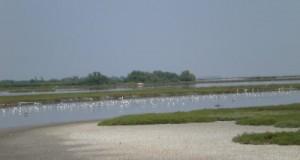 Chiarezza sul maxi progetto che riguarda il rilancio turistico del Delta del Po a Comacchio
