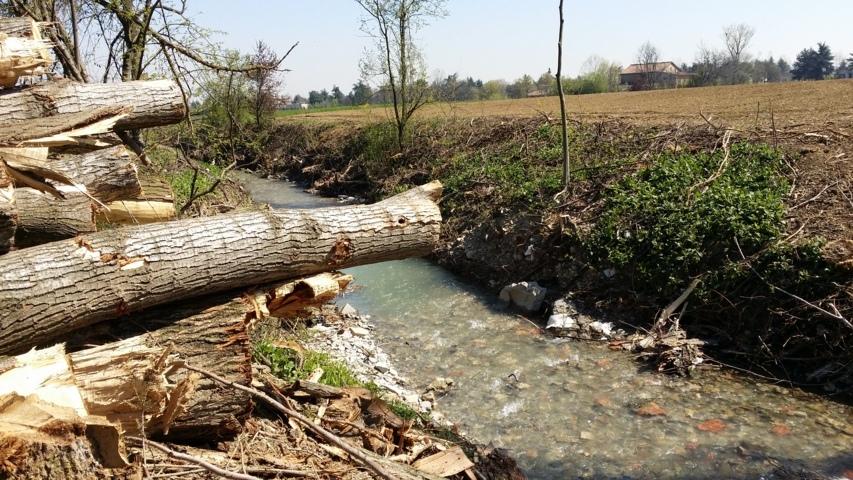 Il taglio degli alberi ha riguardato tutta la zona Pedemontana di Modena