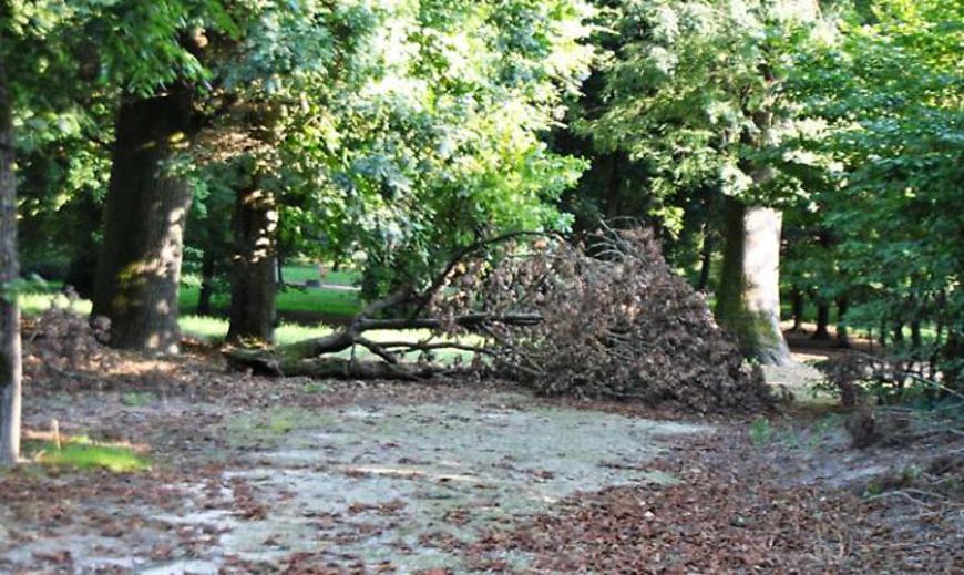 Lo stato di incuria in cui versa il Giardino storico della Reggia di Colorno a Parma
